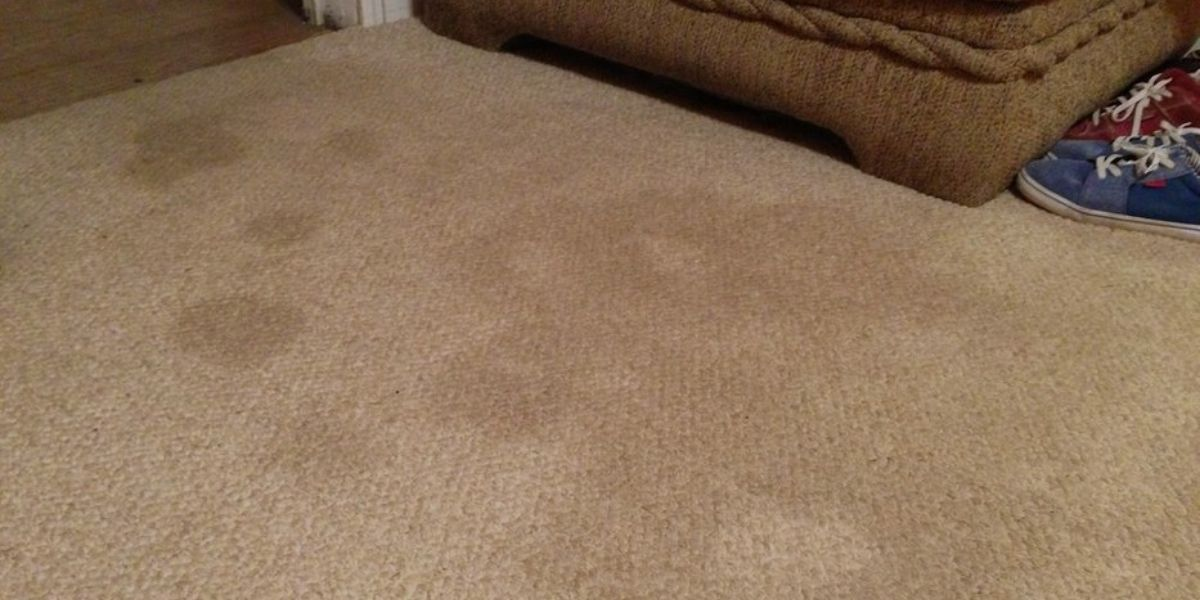 If your carpet is showing signs of wear and tear SmartVacuumGuide